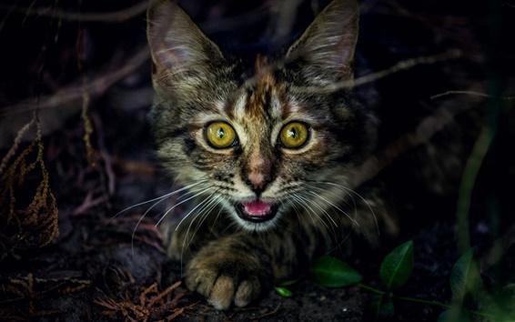 Fondos de pantalla Cara gatito lindo, ojos amarillos