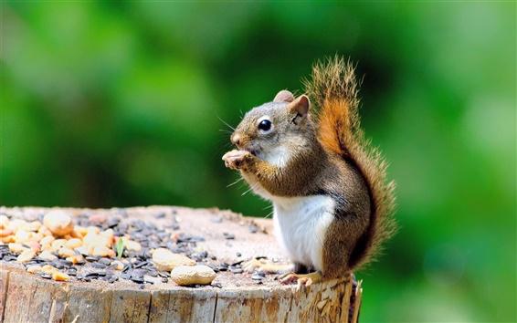Fond d'écran Écureuil mignon, souche, manger quelque chose