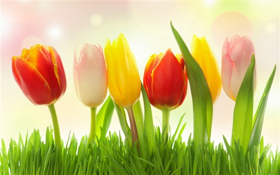 Wallpaper Different colors flowers, grass, tulips, pink, yellow, red