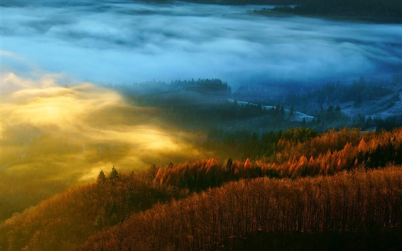 Wallpaper Forest, nature, trees, autumn, mist, morning