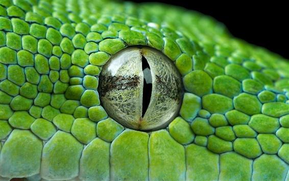 Papéis de Parede Olho verde python