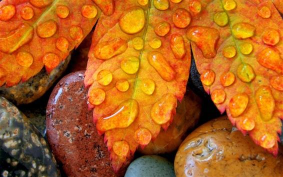 Fond d'écran Feuilles, goutte d'eau, automne
