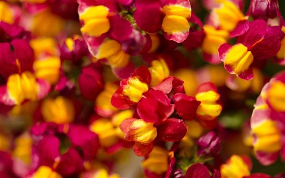 Обои Многие красные мелкие цветы, яркий