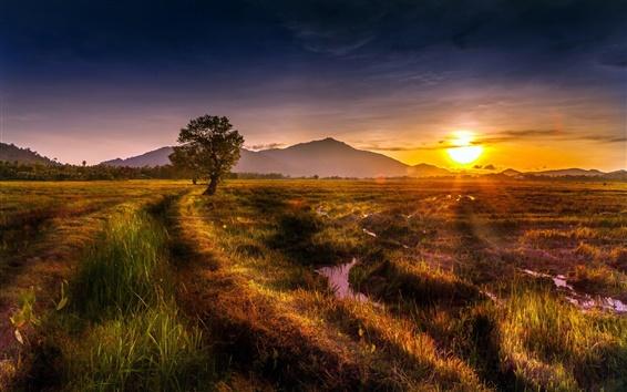 Обои Природа пейзаж, поля, дерево, закат, лето