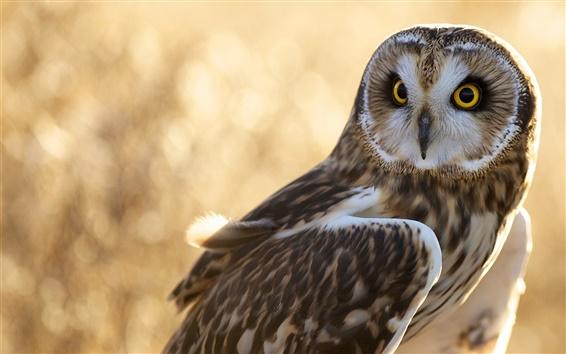 Wallpaper Owl, bird, glare
