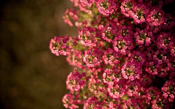Papéis de Parede Pequenas flores cor de rosa, verão