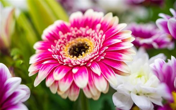 Wallpaper Pink white flowers, chrysanthemum, petals, macro
