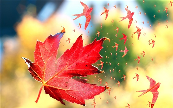 Papéis de Parede Folhas de bordo vermelhas, pássaros, arte