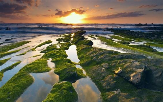 Обои Испания, побережье, море, мох, восход
