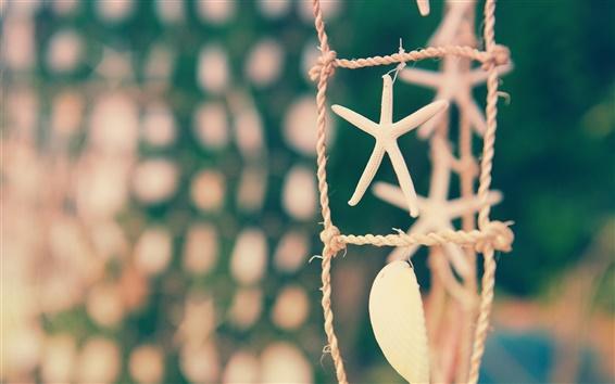 Обои Натюрморт, веревка, фокус, оболочка, морские звезды
