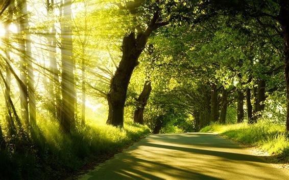Wallpaper Sunrise, spring, forest, trees, road