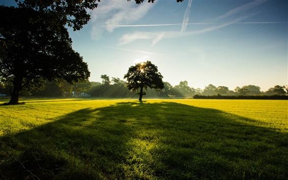 Fond d'écran Arbres, parc, l'herbe, vert, ciel, nuages, la lumière du soleil