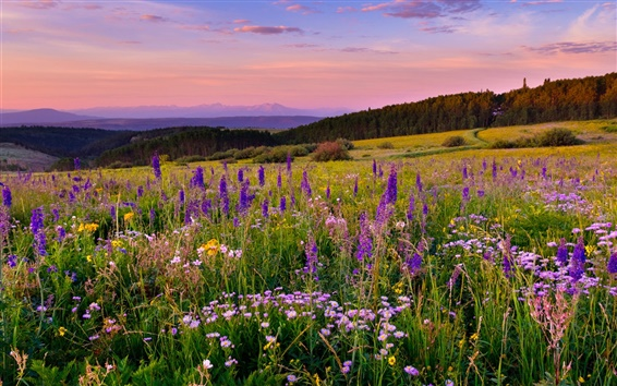 Wallpaper White River Plateau, Colorado, flowers, meadow