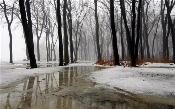 Wallpaper Winter, trees, snow, ice, water, fog, rain
