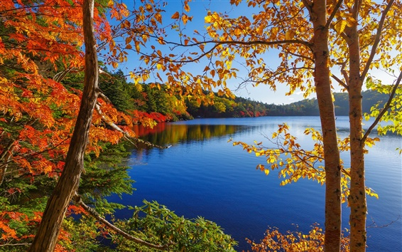 Wallpaper Autumn, lake, trees, forest, sky