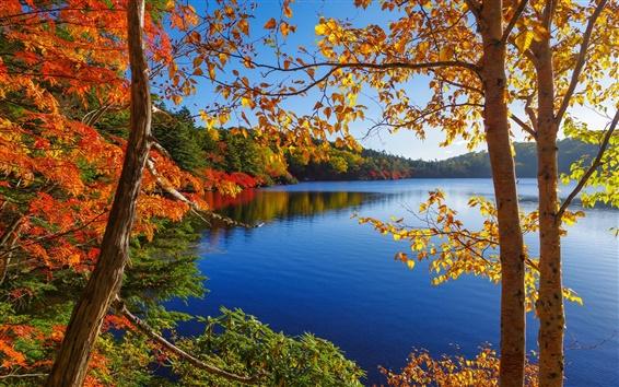 Fond d'écran Automne, lac, arbres, forêt, ciel