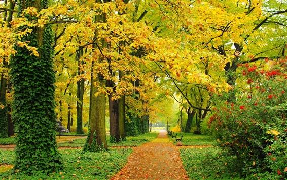 Обои Осень, парк, деревья, желтые листья, дорожки, скамейки