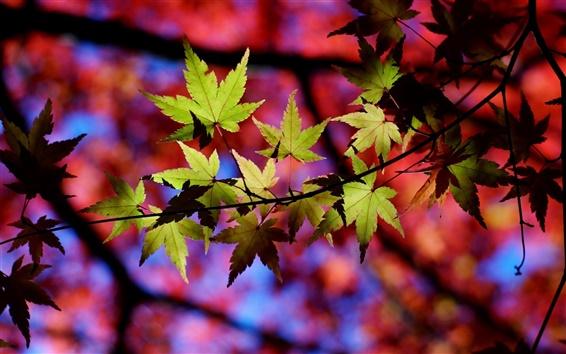 Papéis de Parede Outono, árvore, galhos, folhas, luz