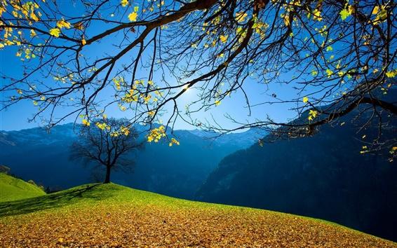 Papéis de Parede Outono, árvores, folha, montanhas, céu azul, sol