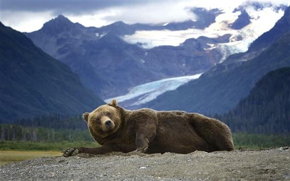 Papéis de Parede Urso, montanhas, Alaska