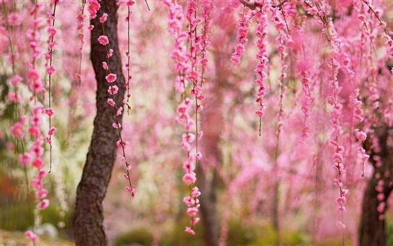 Wallpaper Beautiful spring, pink flowers bloom, trees