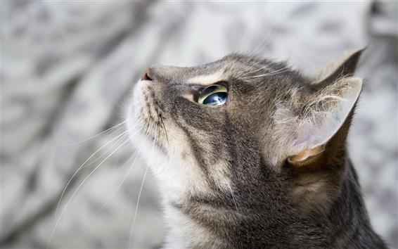 Обои фокус Cat