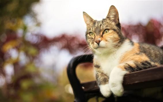 Обои Симпатичный кот, полосатый, лицо