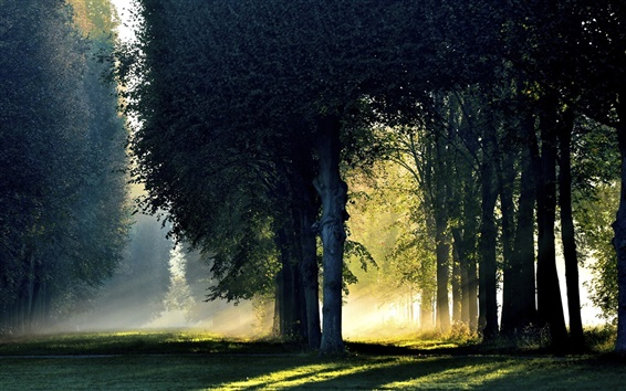 Wallpaper Forest, trees, morning, sunlight, fog, autumn