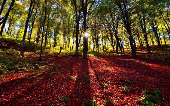 Fondos de pantalla Bosque, árboles, sombra, sol