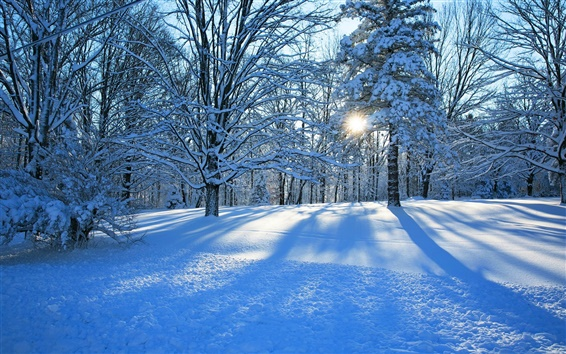 Fond d'écran Forêt, arbres, hiver, neige, soleil