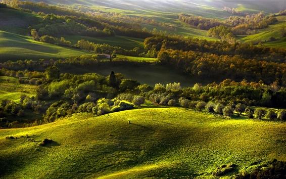 Wallpaper Hills, forest, grass, autumn