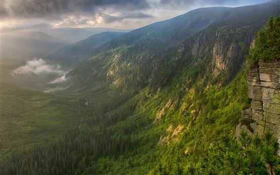 Обои Горы, лес, долина, туман, утро