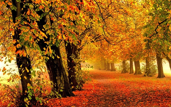 Wallpaper Nature autumn, forest, park, trees, leaves, colorful, road