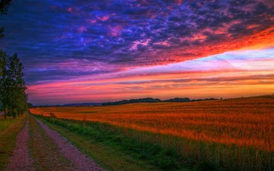 Wallpaper Nature landscape, sunset, road, fields, trees
