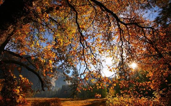 Обои Природа пейзаж, осень, дерево, ветки, листья, солнце