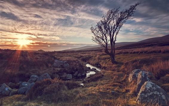Обои Природа, дерево, река, камни, солнечные лучи, закат