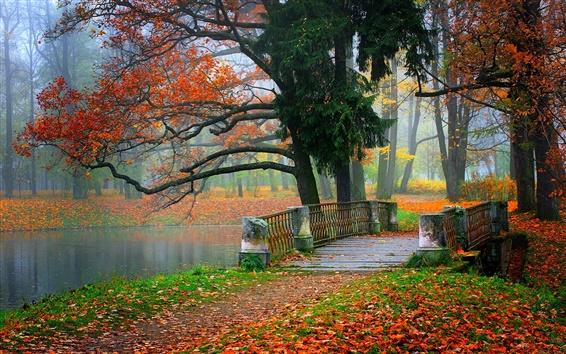 Fond d'écran Parc paysage, rivière, l'eau, la forêt, les arbres, les feuilles, coloré, automne