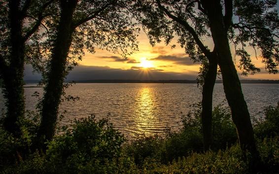 Wallpaper River, trees, sunset