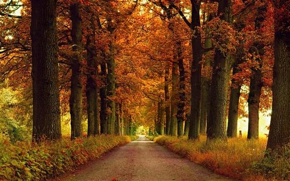 Fondos de pantalla carretera, otoño, árboles, hierba