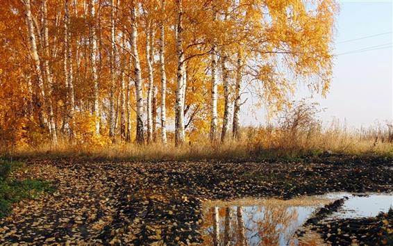 Wallpaper Road, birch, autumn, nature scenery