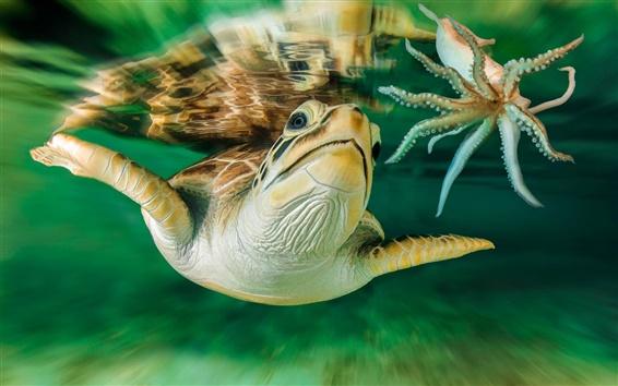 Papéis de Parede Mar, tartaruga, Austrália, mundo subaquático