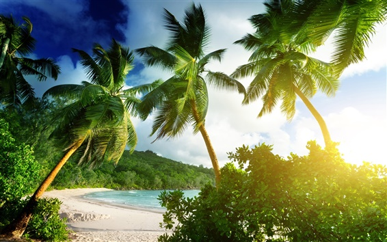 Wallpaper Seychelles, Mahe island, Takamaka beach, tropical, palms, sea, sunshine