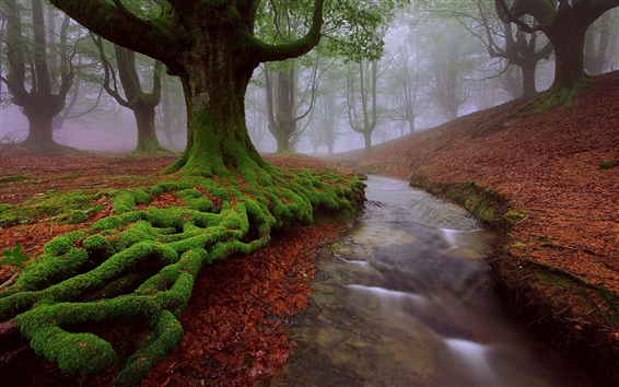 Wallpaper Spain, Basque country, trees, moss, stream, summer