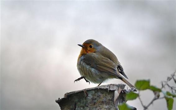 Papéis de Parede Sparrow, toco, bokeh