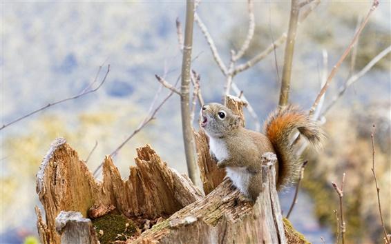Wallpaper Squirrel look up