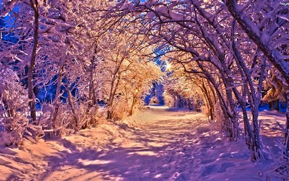 Papéis de Parede Inverno, noite, neve, árvores, luzes