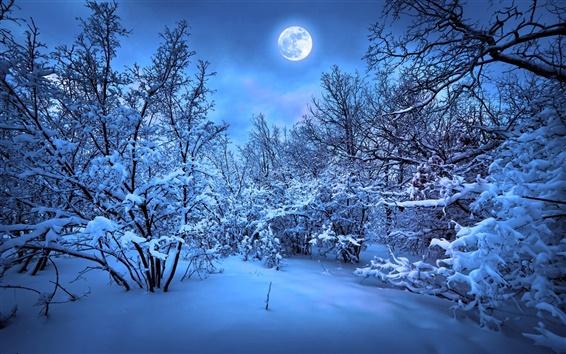Fondos de pantalla Nieve Noche de invierno, árboles, luz de la luna