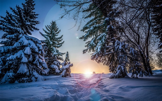 Wallpaper Winter, snow, spruce trees, sunset, night