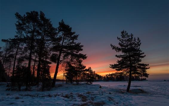 壁紙 冬の夕日、雪、木、夕暮れ