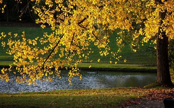 Fond d'écran Les feuilles jaunes, arbre, automne, étang, la lumière du soleil
